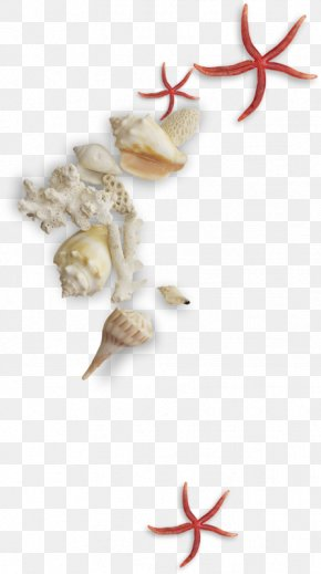 Shells And Conch - Seashell Conch Mollusc Shell PNG