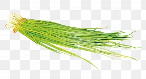 Vector Onion Leaves - Onion Painting Vegetable Scallion PNG