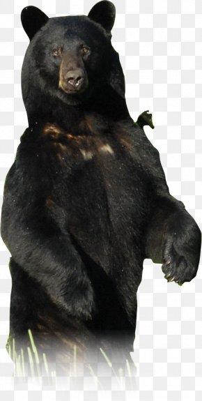 American Black Bear Family - Grizzly Bear American Black Bear Alaska Peninsula Brown Bear Sun Bear Mammal PNG