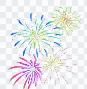 Fireworks - Graphic Design Flora Petal Text Illustration PNG