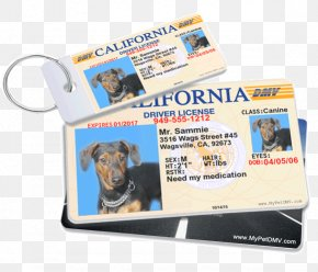 Pet Drivers License Driver's License Identity Document DrivingDriving License - MyPetDMV PNG
