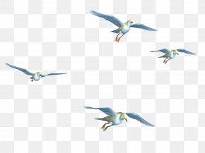 Flying Birds - Bird Flight Bird Flight Clip Art PNG