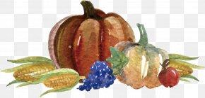 Hand-painted Vegetable Vector - Thanksgiving Dinner Template Rxe9sumxe9 Pumpkin PNG
