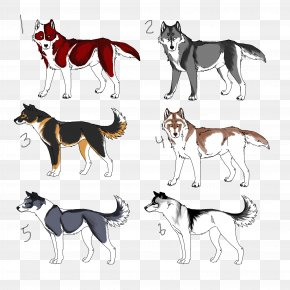 Dog Husky - Dog Breed Seppala Siberian Sleddog Siberian Husky Alaskan Husky Sled Dog PNG