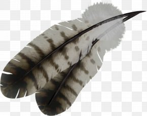 Feather - Feather Bird PNG