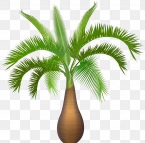 Palm Tree Plant Clip Art Image - Hyophorbe Verschaffeltii Hyophorbe Lagenicaulis Queen Palm Tree Subtropics PNG