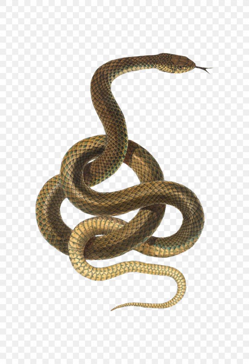 Snake Reptile Desktop Wallpaper Png 900x1314px Snake