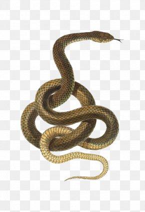 Snake - Snake Reptile Desktop Wallpaper PNG