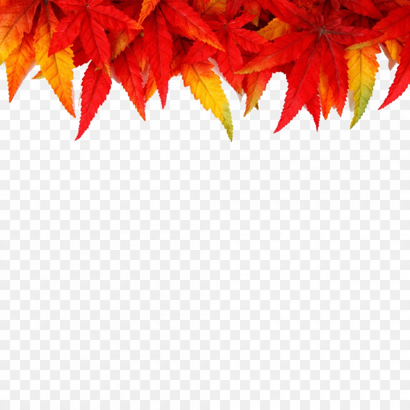 Desktop Wallpaper Picture Frames Autumn Png 1000x1000px Picture Frames Autumn Autumn Leaf Color Display Resolution Drawing