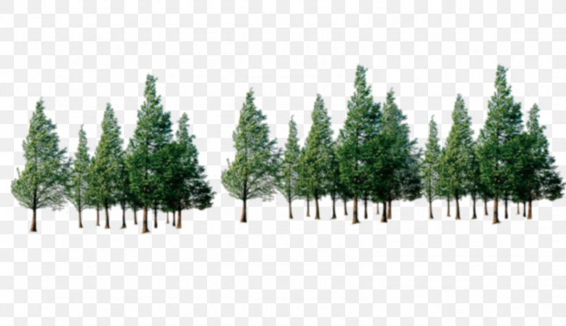 Tree Forest, PNG, 1584x914px, Tree, Biome, Computer Software, Conifer, Dots Per Inch Download Free