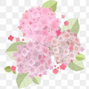 Fresh And Beautiful Light Pink Hydrangea - French Hydrangea Pink Flowers Pink Flowers PNG