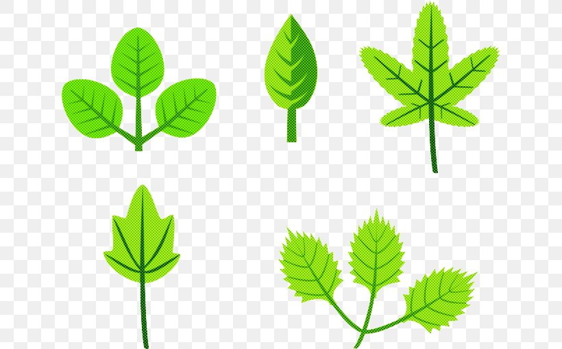 Leaf Herbal Green Plant Flower, PNG, 640x510px, Leaf, Flower, Flowering Plant, Green, Herbal Download Free