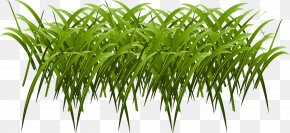 Vector Painted Grass - Euclidean Vector Download Computer File PNG