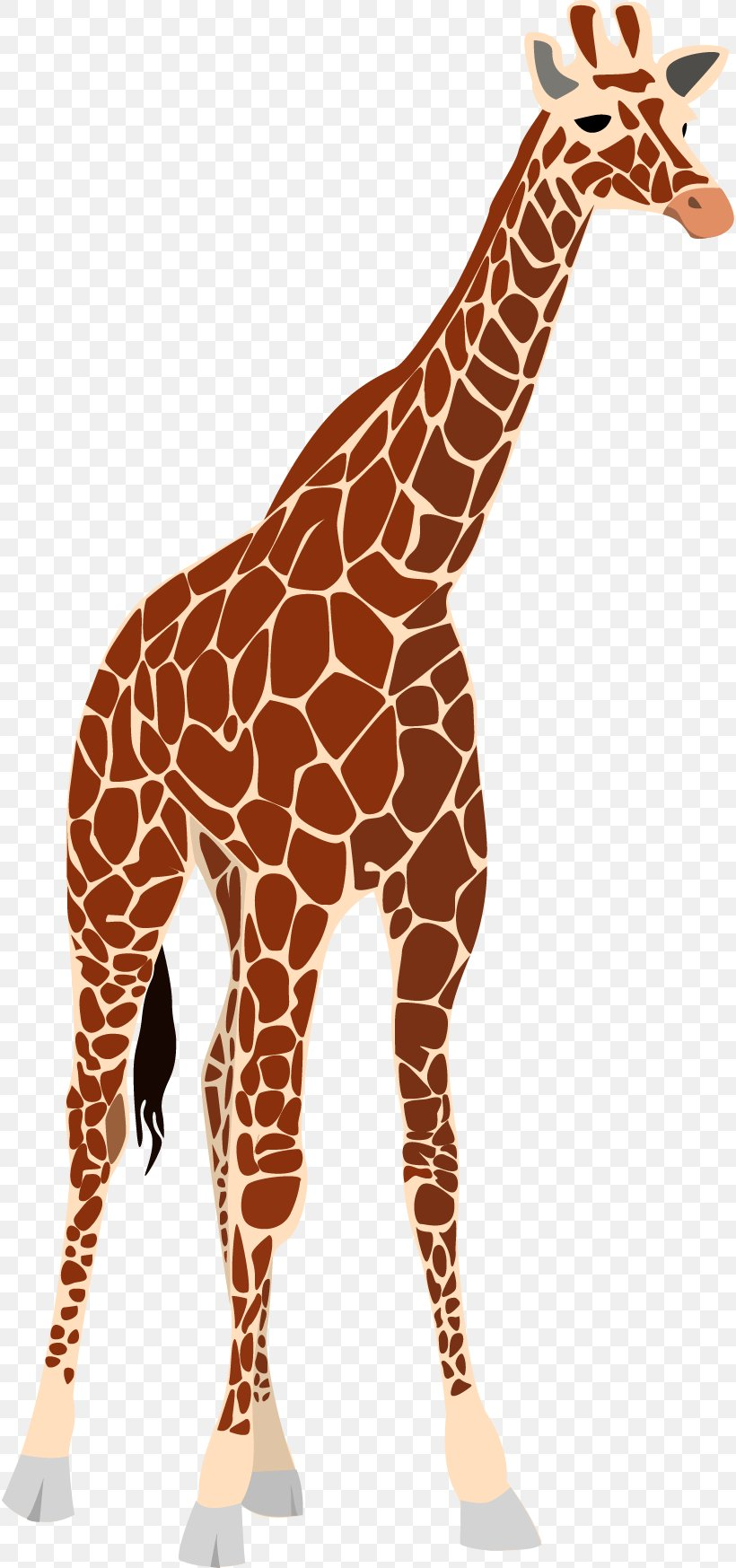Giraffe Okapi Clip Art, PNG, 816x1747px, Giraffe, Animal, Fauna, Free Content, Giraffidae Download Free