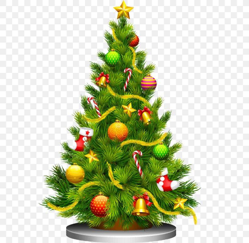 Christmas Tree Christmas Ornament Christmas And Holiday Season Clip Art, PNG, 800x800px, Christmas Tree, Christmas, Christmas And Holiday Season, Christmas Decoration, Christmas Ornament Download Free