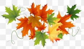 Autumn Transparent Leaves - Thanksgiving Clip Art PNG