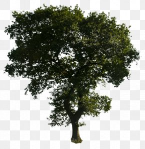 Clipart Tree Download - Tree PNG