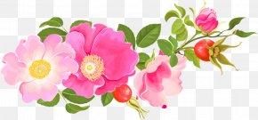 Pink Floral Design - Garden Roses Centifolia Roses Floral Design Floribunda PNG