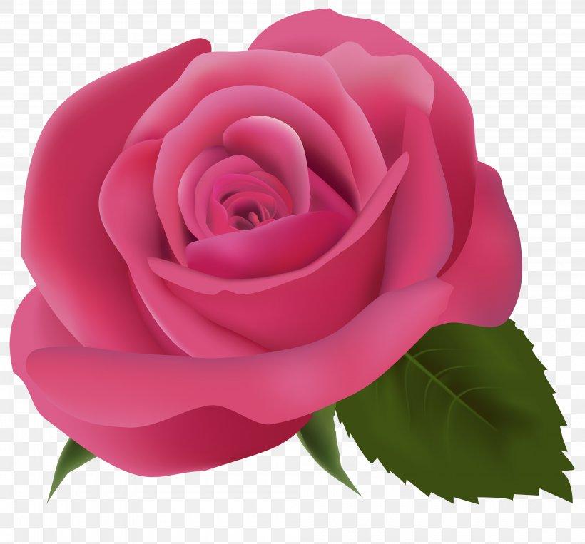 Pink Clip Art, PNG, 4000x3723px, Pink, China Rose, Color, Cut Flowers, Floribunda Download Free