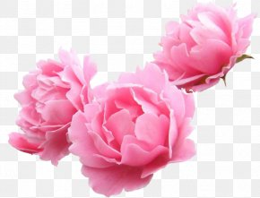 Peonies - Peony Garden Roses Lilium Flower Clip Art PNG