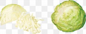 Cabbage Vegetables - Red Cabbage Cauliflower Vegetable PNG
