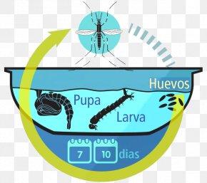 Mosquito - Yellow Fever Mosquito Dengue Fever Zika Virus Chikungunya Virus Infection PNG
