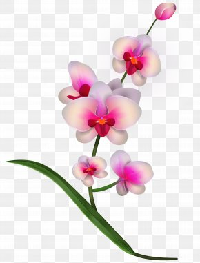 Orchid Clipart PNG Image - Lady's Slipper Orchids Flower Clip Art PNG