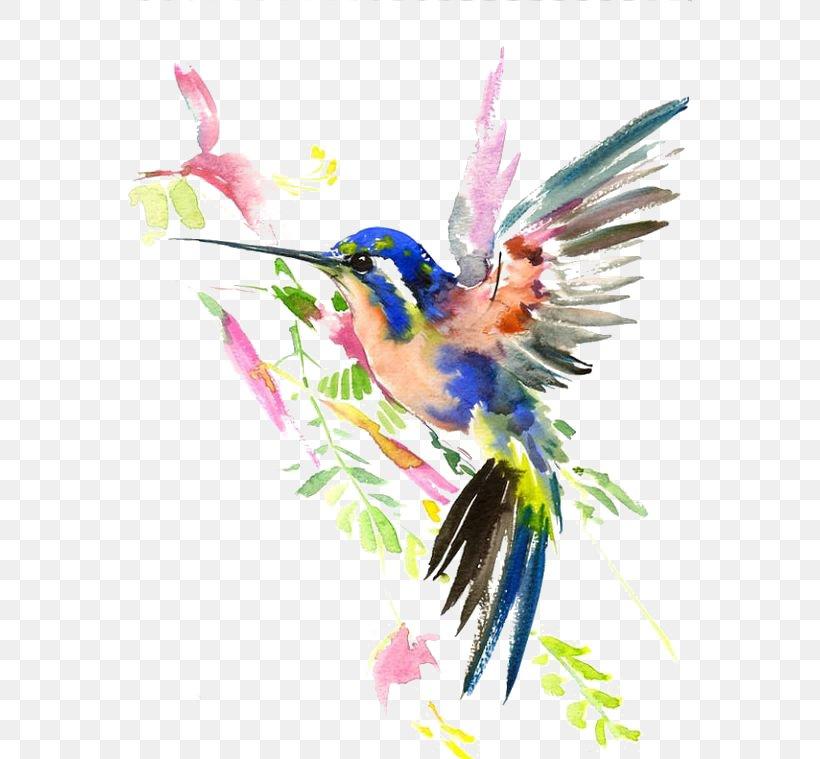 Hummingbird Watercolor Painting Drawing, PNG, 564x759px, Hummingbird, Art, Artist, Beak, Bird Download Free