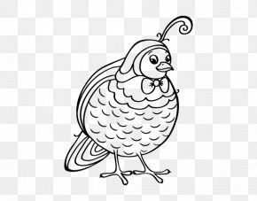 French Horn Coloring Page - Bird Drawing Woodpecker Coloring Book Painting PNG