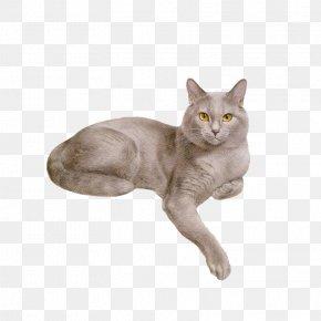 Cat - Cat Dog Kitten Animation PNG