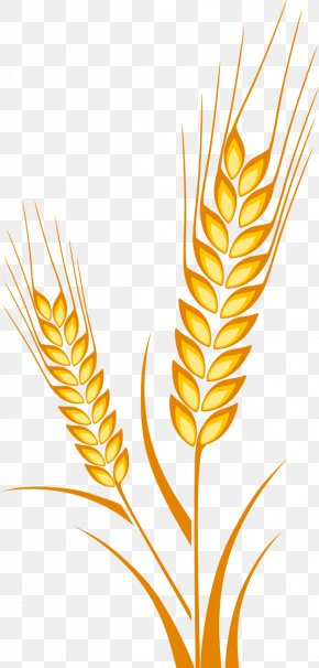 Ear - Ear Wheat Drawing Cereal Maize PNG