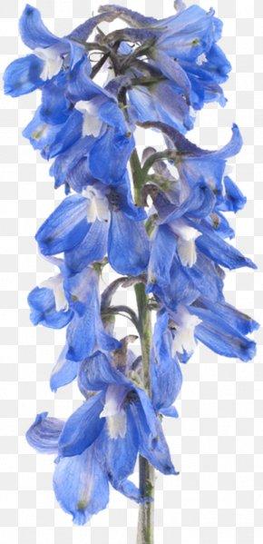 Flower - Larkspur Flower Stock Photography Clip Art PNG