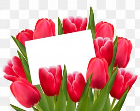 Transparent Red Tulips Decoration Clipart Picture - Museum Of Champions Mother's Day Party Gift PNG