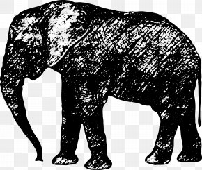 Elephant Vector - African Elephant Indian Elephant Silhouette Sticker PNG