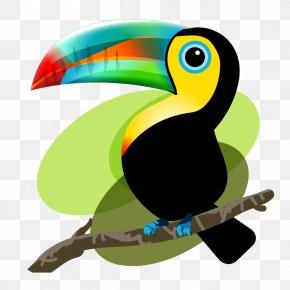 Toucan - Iquitos Bird Baby Toucan: Mama And Papa Toucan Decide To Adopt Frog PNG