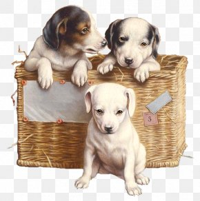 Pups - Puppy Dog Breed Jack Russell Terrier Siberian Husky Dachshund PNG