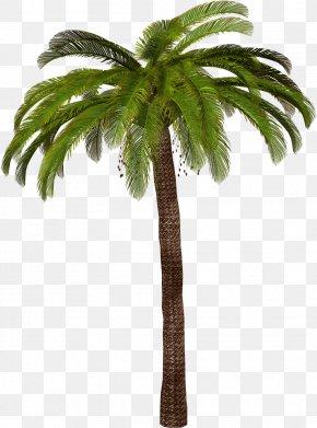 Tree - Arecaceae Tree Sago Palm PNG