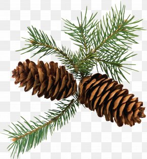 Pine Cone - Pine Conifer Cone Branch Fir Clip Art PNG