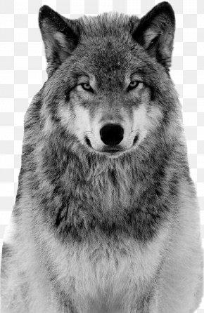 Saarloos Wolfdog Coyote Alaskan Tundra Wolf Borzoi Siberian Husky PNG