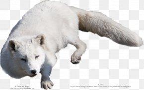 Arctic Fox - Arctic Fox Alaskan Tundra Wolf Polar Bear PNG