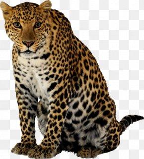 Leopard - Leopard Tiger Felidae Lion Jaguar PNG