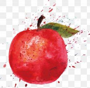 Apple - Watercolor Painting Apple Cartoon Illustration PNG