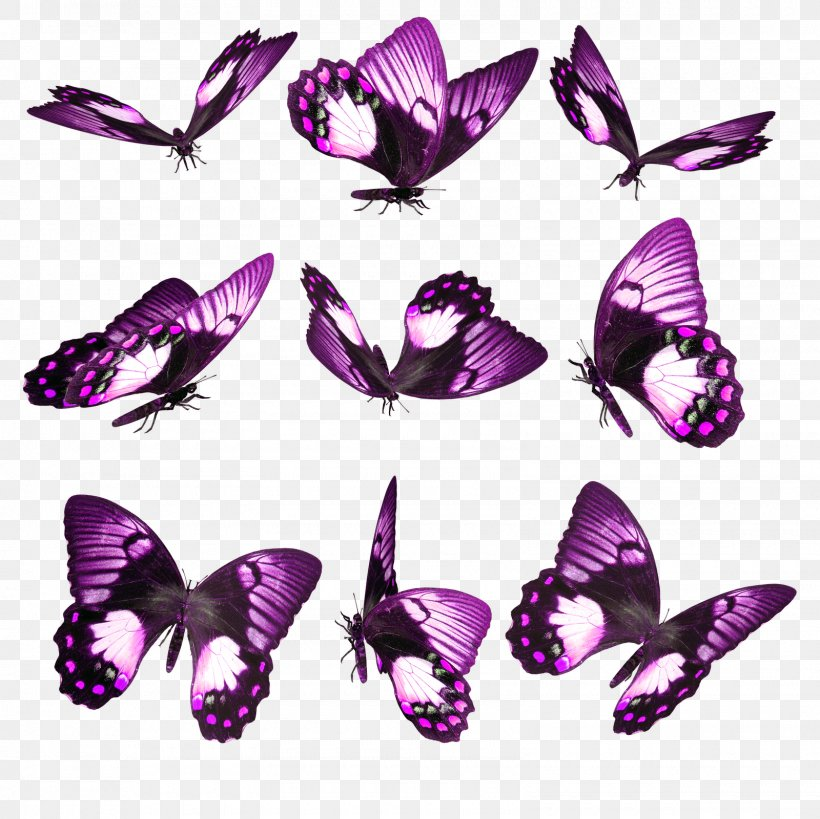 Butterfly Desktop Wallpaper Android Png 1600x1600px