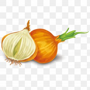 Vector Onion - Yellow Onion Shallot Calabaza Dietary Supplement Food PNG