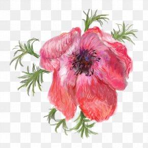 Pomegranate Safflower - Opium Poppy Flower Red PNG