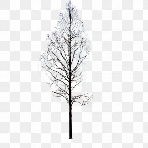 Winter Trees - Twig Pine Black And White Symmetry Pattern PNG