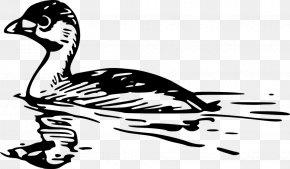 Bird Swimming Cliparts - Bird Cygnini Clip Art PNG