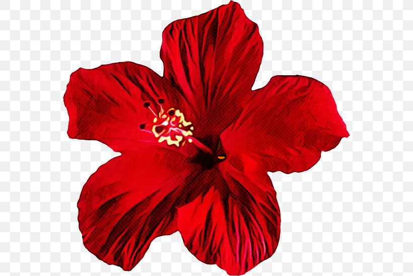 Petal Hibiscus Flower Red Hawaiian Hibiscus, PNG, 570x547px, Petal, Chinese Hibiscus, Flower, Hawaiian Hibiscus, Hibiscus Download Free