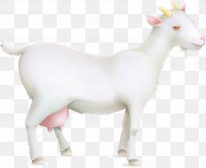 Livestock Goats Vector - Sheep Goat Cattle PNG