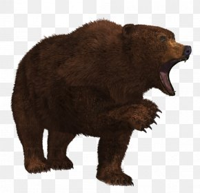 Bear 7 - Grizzly Bear PNG